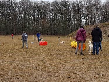 Puppyles hondentraining dog-coach hondenschool vught
