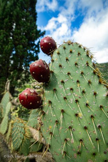 Gran Canaria Schönste Orte Jardin Botanico