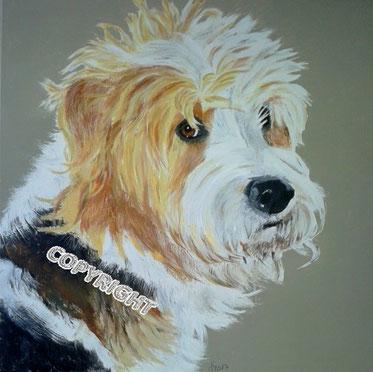 Hundeporträt, Hundeportrait, Tierporträt, Tierportrait, Griffon