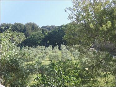 Huile d'olive du Brusc