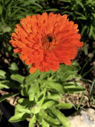 Plante, fleur, graines, biologiques