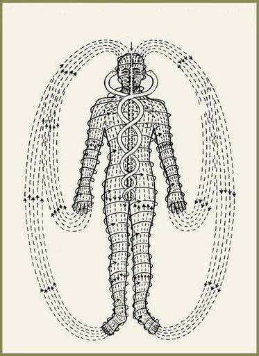 Die drahtlose menschliche Anatomie – Dr. Randolph Stone