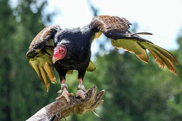 Babylone la grande est devenue un repaire pour tout oiseau impur et détestable et un repaire de démons