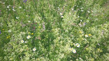 Achtsamkeit für Erwachsene - Achtsame Mittagspause - mindfulness - Achtsamsein - Achtsammitdir - Blumenwiese - Hochsensibel sein