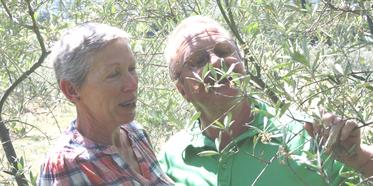 Producteurs d'huile d'olive bio passionnés