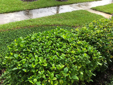 preparing your landscape and irrigation for rainy season