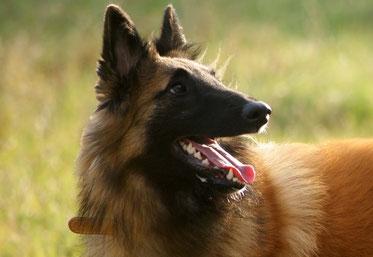 Club canin ou éducateur canin charente maritime