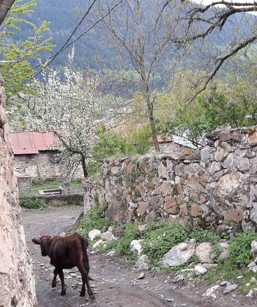 Voyage Géorgie Svanétie Mestia montagnes
