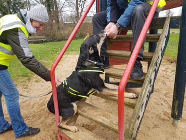 Mantrailing Hund wird belohnt Sucharbeit