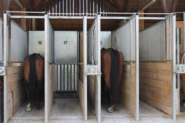 Bedarfsgerechte Fütterung von Raufutter mittels Futterautomat von HIT