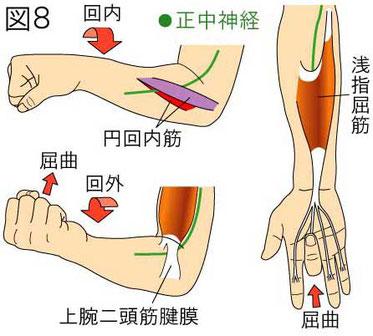 肘部 正中神経障害 誘発テスト