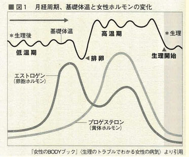 月経周期、基礎体温と女性ホルモンの変化