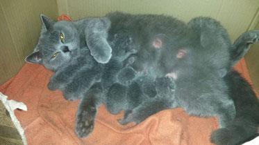 Unsere Ruta Nova Coco Chanel mit ihren Kitten, Vater ist Gr.Euro.Ch. Adonis Line Aston-Martin
