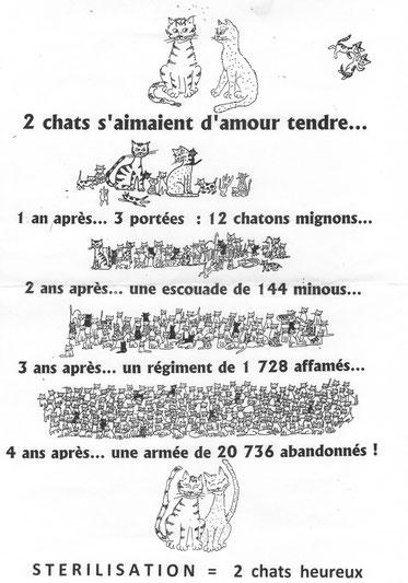Avec l'aimable autorisation de l'Ecole du Chat de Saint-Piat