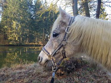 Pferd, Schimmel, Fellwechsel, Tiertherapie, Erding, Pferdephysiotherapie, Pferdeosteopathie