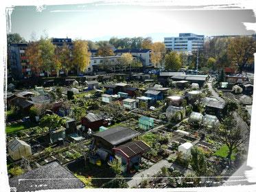 Die Kleingarten-Anlage im Oktober 2014