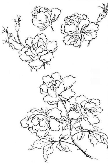 Fleurs de rosier yue-ki et chö-wei.