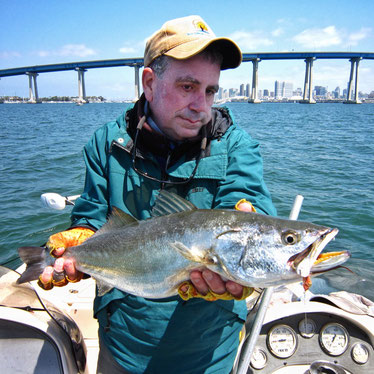 Shortfin Corvina caught fly fishing on San Diego Bay