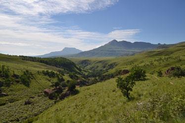 Drakensberge 1
