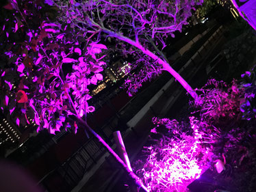 宝塚花の道2
