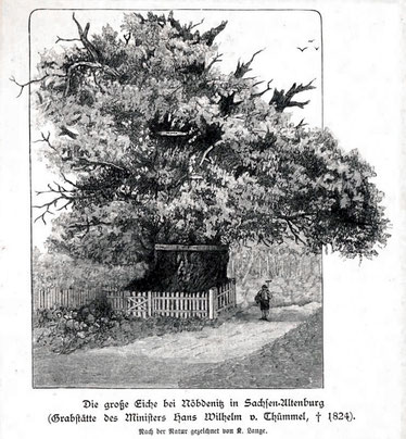 Große Eiche bei Nöbdenitz, K. Lange, Stich aus dem 19. Jahrhundert