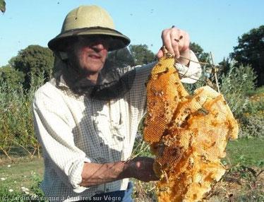 Ruche d'abeilles sauvages trouvée dans le jardin mosaique en 2009