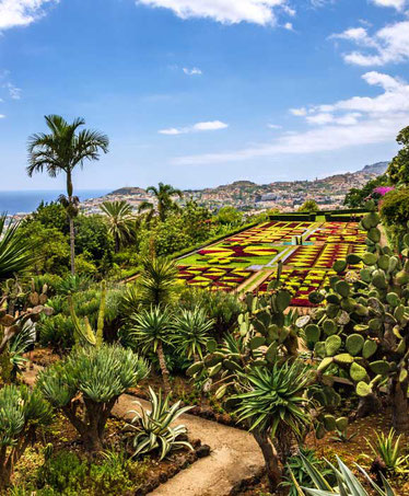 funchal-botanical-garden-garden-top-things-to-do-madeira