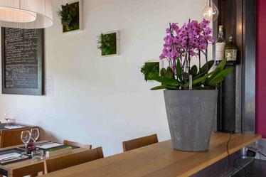 arrosage orchidée connecté avec OriCine® en situation dans un bar 2