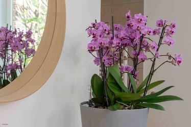 arrosage orchidée connecté avec OriCine® en situation dans un maison 2