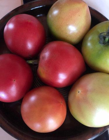喜界島のトマト日を追って色付きます。甘くてまいう~💛