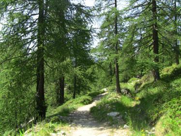 森を歩いていきます。
