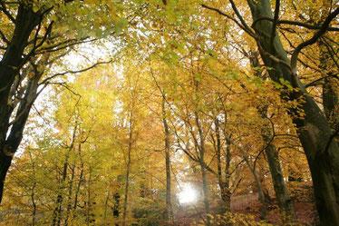 Teutoburger Wald © M. Schrumpf