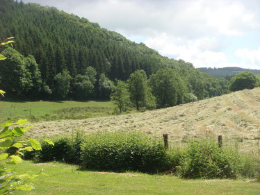The Sollerbach Valley Gorge - view from the Sonlez Mill in direction Berlé