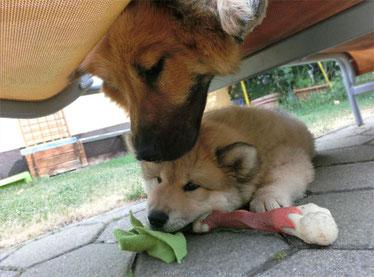 Anuuk hat seiner Mama den Spielknochen entführt :-)))