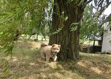 Beim heutigen Spaziergang durfte Anuuk wieder frei laufen