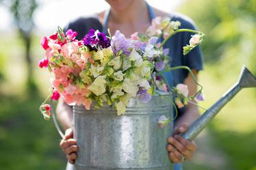 Englische Duftwicken sind wunderschön in der Vase - eine Auswahl bei www.the-golden-rabbit.de
