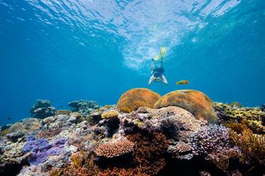 Reisebaustein Great Barrier Reef