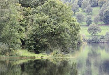 Eifel Nationalpark MPU Vorbereitung Kurzurlaub