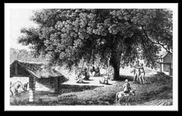 L'orme mégnétisé du lavoir de Buzancy
