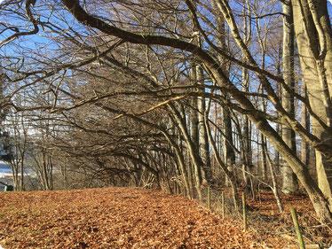 Christoph Steinbach - Herbstbäume zum Licht, Foto 11-2017