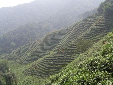 Bild: Shizhao [CC BY 1.0 (https://creativecommons.org/licenses/by/1.0)], Bildklick: externer Link zu Wikimedia.*