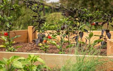 Gekauftes modernes Hochbeet wird bepflanzt