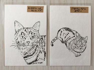 Poppy and Tina Designのポストカード、猫の一言コメント付き
