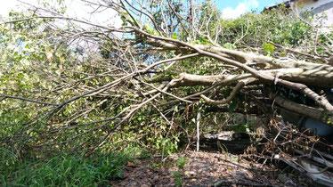 進入路に倒木