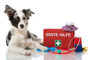 Hund mit erste Hilfe Koffer