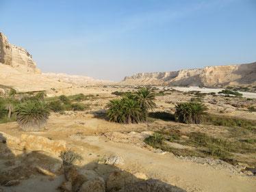 Das Wadi Schuwaymiyyah ist ganzjährig grün bewachsen
