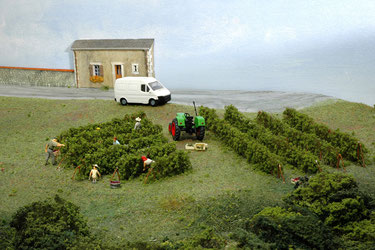 Les Vendanges AOC coteaux du loir