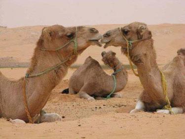 Viaggi nel deserto del Marocco Harmony Desert