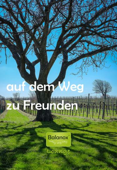 Am Weg von Kleinhöflein nach Eisenstadt-Süd. Foto: ©Karl Heindl | Balanox™ Lounge