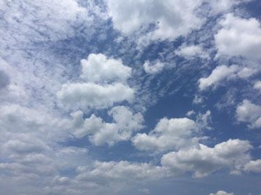 今日も日中は夏空でした~
